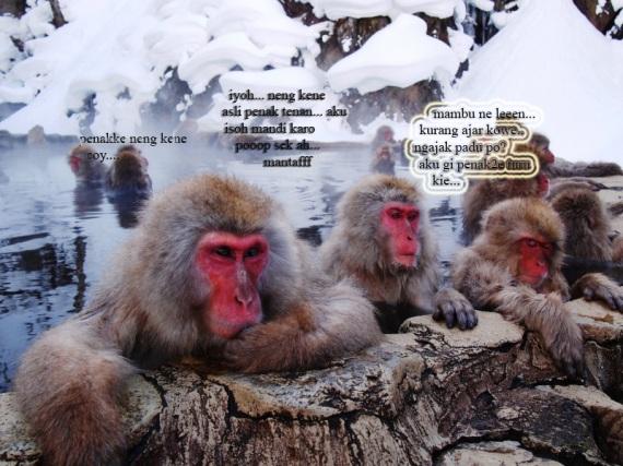 monyet merah