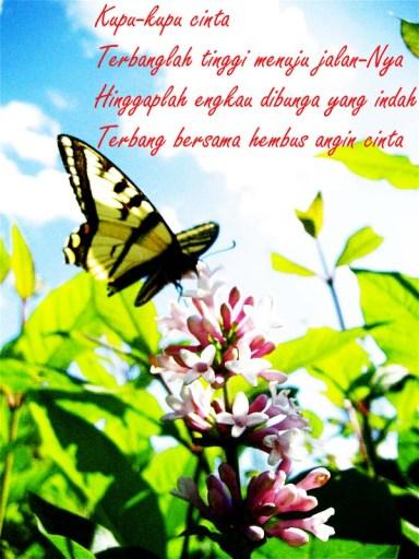 kupu-kupu cinta